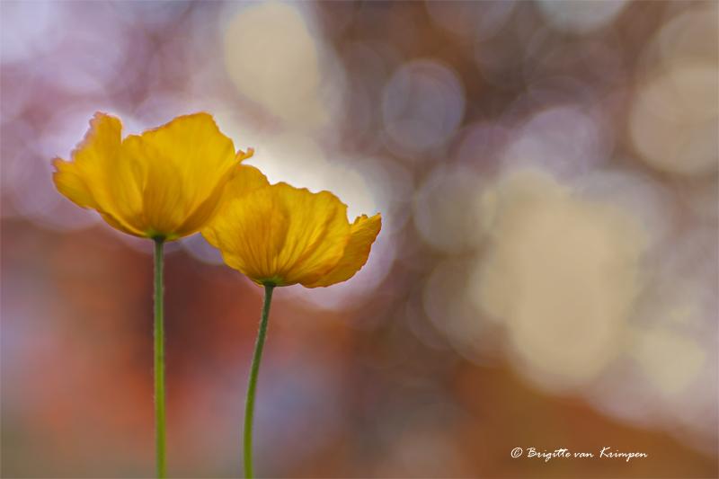 Orange spring delight