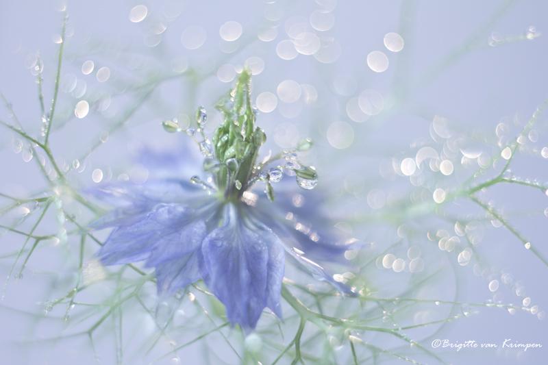 Fresh blue