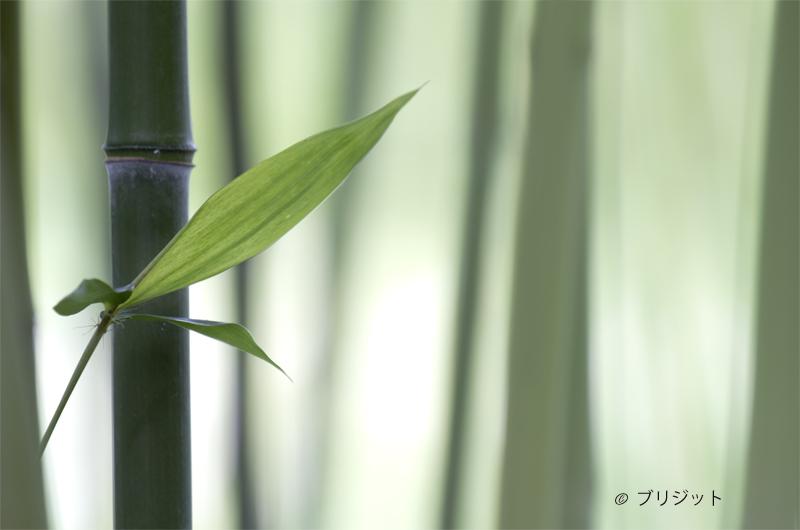 Chikuza  竹材 - bamboe