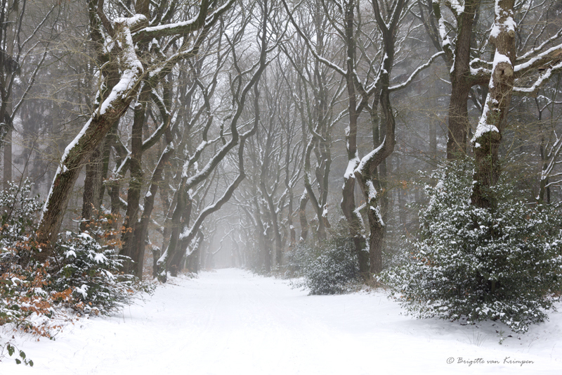 Winter Fairy lane
