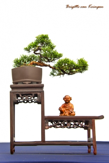 Bonsai - 盆栽 Gepot dwergboompje