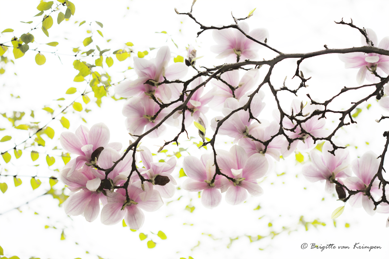 Seika  精華 - essentie; wezen; bloem; keur; ; zuiverste voorbeeld; het beste; fine fleur