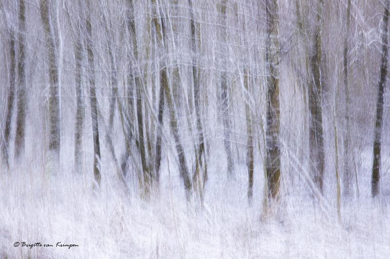 Winter white feeling