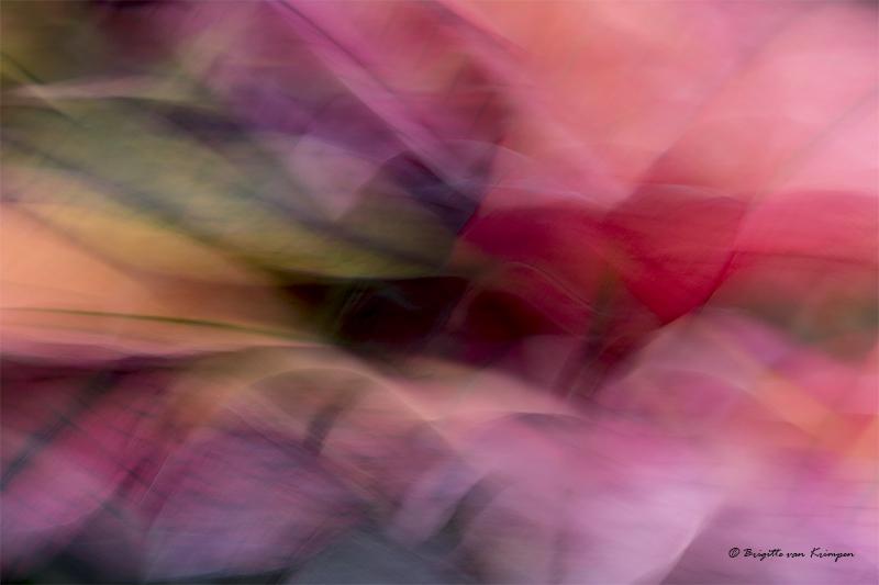 Abstract pursang