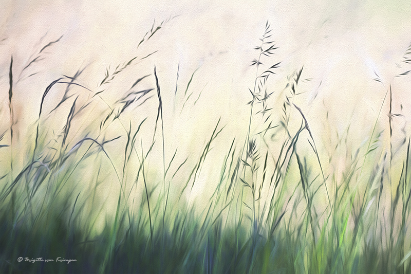 Grass Art 2