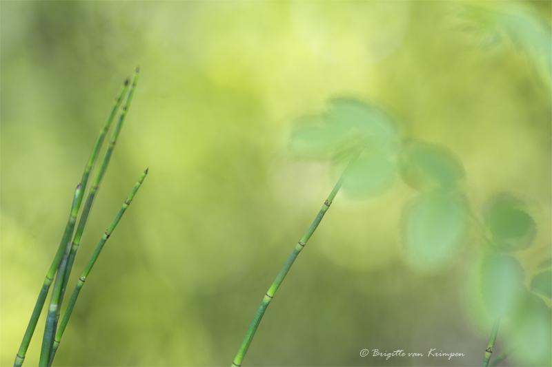 Take  竹 - bamboe