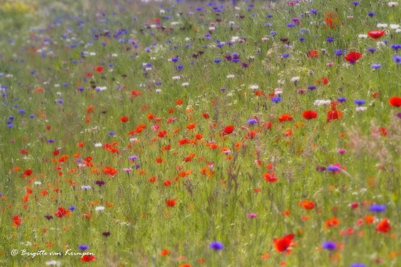 Monets summer breeze