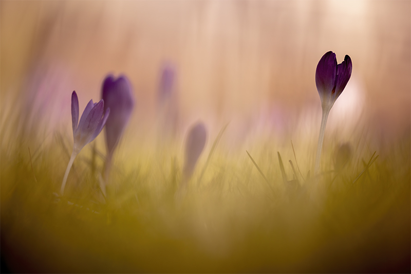 Spring allover
